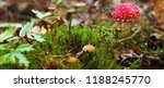 poisonous mushrooms in the... | Shutterstock . vector #1188245770