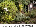 bucket on a stick in a...   Shutterstock . vector #1188257989