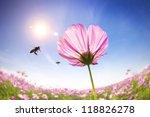 Bee And Pink Daisies On The...