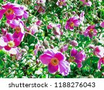 Small photo of Border full of flowers. Vibrant colours and a hint of HDR.