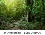 lush green foliage in tropical... | Shutterstock . vector #1188298903