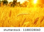 wheat field on sun. harvest and ... | Shutterstock . vector #1188328060