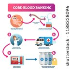 cord blood banking infographic...   Shutterstock .eps vector #1188328096