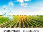 agricultural field in a clear... | Shutterstock . vector #1188330049