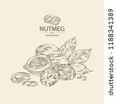 nutmeg  nut and leaves. vector...   Shutterstock .eps vector #1188341389
