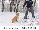 cocker spaniel training with... | Shutterstock . vector #1188350530