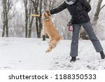 brave cocker spaniel jump to... | Shutterstock . vector #1188350533