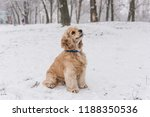 home pet catch snowflakes with... | Shutterstock . vector #1188350536