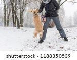 dog winner catch stick for... | Shutterstock . vector #1188350539