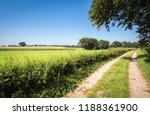 looking at a tree and lush... | Shutterstock . vector #1188361900