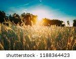 summer sun shining above... | Shutterstock . vector #1188364423