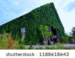 House With Green Vines Covered  ...