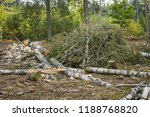 stack of felled trees in the... | Shutterstock . vector #1188768820