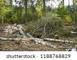 stack of felled trees in the... | Shutterstock . vector #1188768829