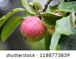 red ripe apple with drops of... | Shutterstock . vector #1188773839