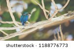 bird  collared kingfisher ... | Shutterstock . vector #1188776773