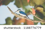 bird  collared kingfisher ... | Shutterstock . vector #1188776779