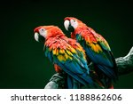 pair of big parrot red macaw... | Shutterstock . vector #1188862606
