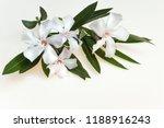 delicate  soft pink oleanders... | Shutterstock . vector #1188916243