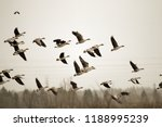Birds And Agriculture....