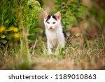 cute tabby kitten laying on the ... | Shutterstock . vector #1189010863