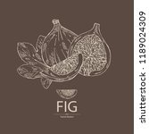figs  fruit and piece of fig.... | Shutterstock .eps vector #1189024309