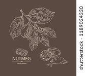 nutmeg  nut and branch. vector... | Shutterstock .eps vector #1189024330