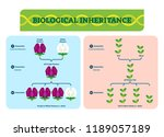 biological inheritance plants... | Shutterstock .eps vector #1189057189