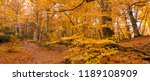 banner of foliage for... | Shutterstock . vector #1189108909