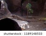 big prehistoric lizard | Shutterstock . vector #1189148533