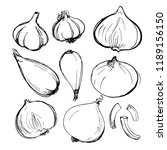 shallot onion  onion  purple...   Shutterstock .eps vector #1189156150