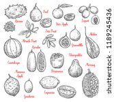juicy exotic fruits sketches.... | Shutterstock .eps vector #1189245436