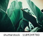 Beautiful Of Green Tropical...