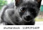 black cat  cute kitty or little ... | Shutterstock . vector #1189291609
