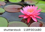beautiful pink lotus flower in... | Shutterstock . vector #1189301680
