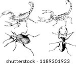 vector drawings sketches... | Shutterstock .eps vector #1189301923