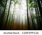 white thick mist in dark forest ... | Shutterstock . vector #1189399126