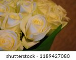 shades of white roses. | Shutterstock . vector #1189427080