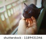 Cute Black Cat Lazily Sleep By...