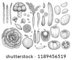 vegetable collection ... | Shutterstock .eps vector #1189456519