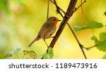 sparrow on tree branch  macro... | Shutterstock . vector #1189473916