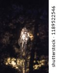 Small photo of a fountain at night. frozen instantaneous