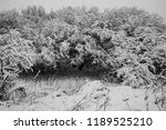 snow covered trees during the... | Shutterstock . vector #1189525210