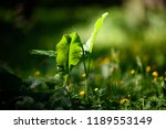 nature and ecology concept.... | Shutterstock . vector #1189553149
