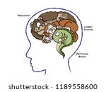 the triune theory of the brain... | Shutterstock . vector #1189558600