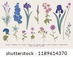 summertime. garden flowers.... | Shutterstock .eps vector #1189614370