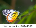 Yellow Red Butterfly  Painted...