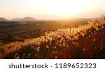dried stalks of reeds against...   Shutterstock . vector #1189652323