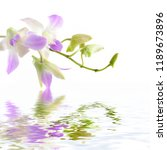 pink orchid flowers isolated... | Shutterstock . vector #1189673896