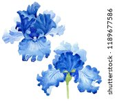 watercolor blue iris flower.... | Shutterstock . vector #1189677586